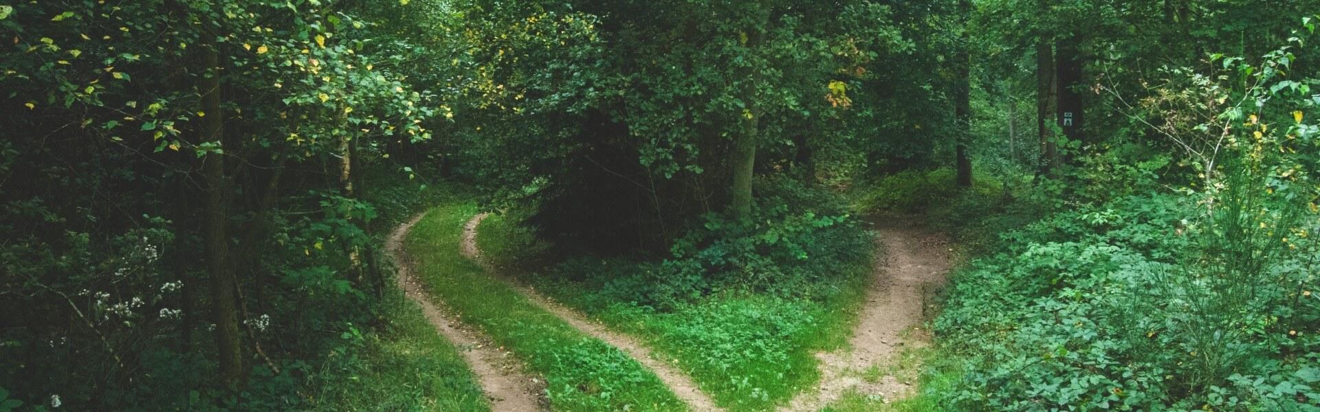 SEO Door de bomen het bos niet zien